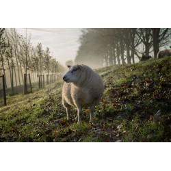 Panier d'agneau Naturel Ethique