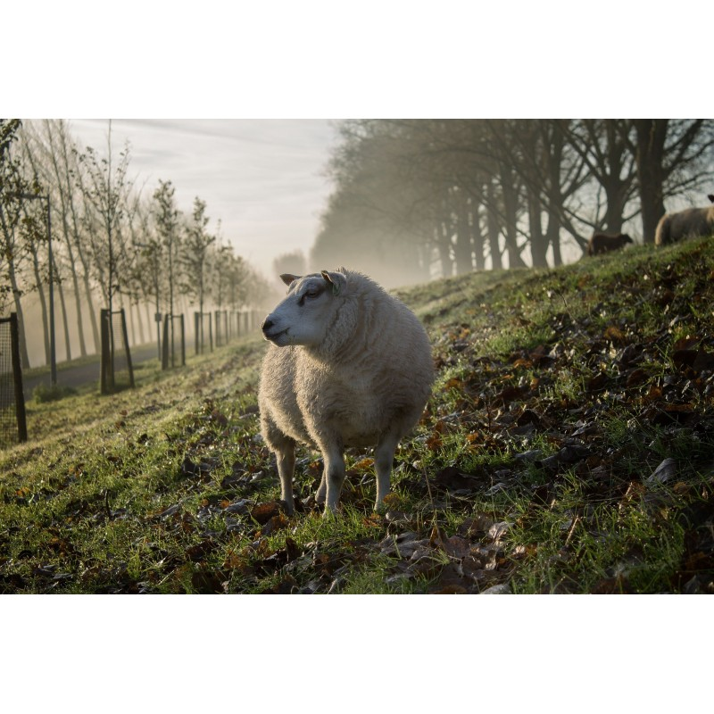 Panier d'agneau BIO