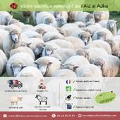 Réserver votre sacrifice Aïd Al Adha 🐑